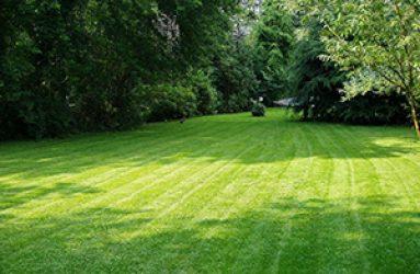 lawn-care-fertilizer2