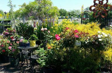 Lawn-Gardens