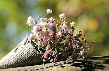 bag-gypsofilia-seeds-herbs