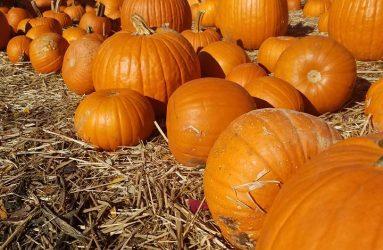 father-nature-garden-center-pumpkin