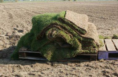 grass-sod