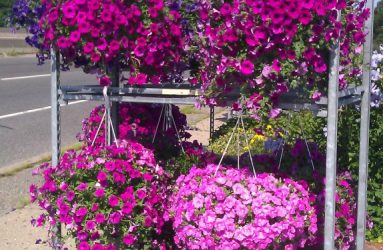 indoor-outdoor plants father nature