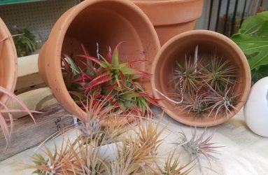 plants-pots-glass