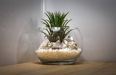 teal blue asia terrarium