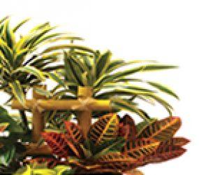 pgs-tropical-plants