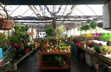 Lawn-Gardens-father-nature-garden-center