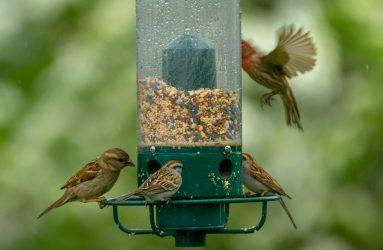 bird Foods