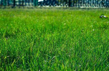 lawn-sod