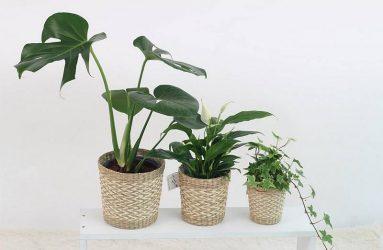 plants-air-plants