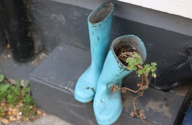 wellington-boots-houseplant