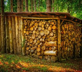 wood-Firewood